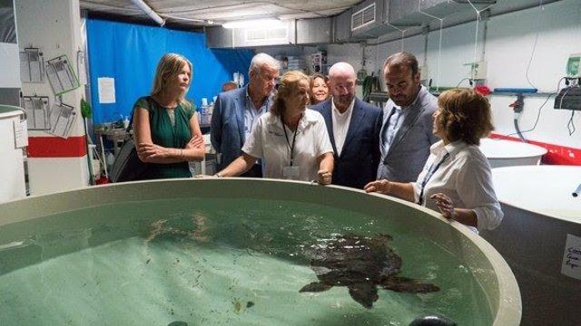 Imagen de un ejemplar de tortuga boba enmarcada en el proyecto de colaboración entre Meliá International Hotels y la Fundación Palma Aquarium.