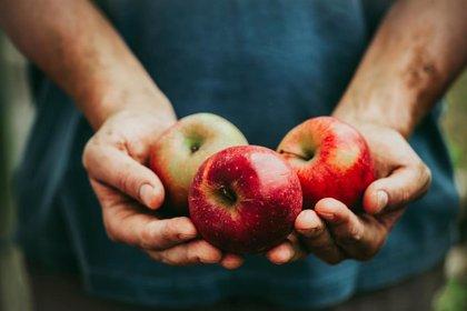 Una manzana esconde en su corazón 100 millones de bacterias