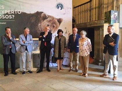 La exposición itinerante 'Vivir con osos' alarga su estancia en la Colegiata San Juan Bautista hasta el 15 de agosto