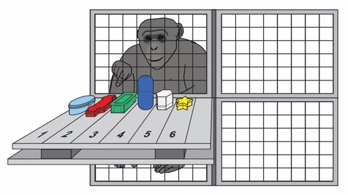 Chimpancé ejercitando su memoria de trabajo