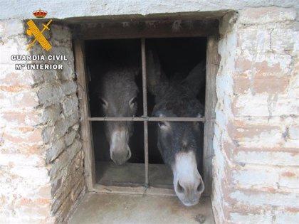 Investigado por dejar morir a más de 40 animales en una explotación de Ávila