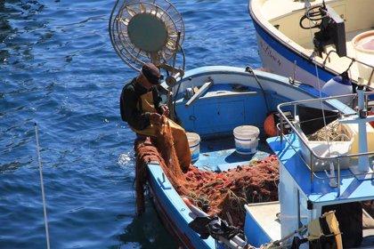 MSC y WWF diseñan una herramienta para el proyecto Medfish que mide la sostenibilidad de las pesquerías