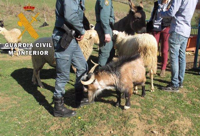 Cabras localizadas por la Guardia Civil en Navarra hurtadas en Portugal