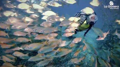 La Gomera organiza un concurso de fotografía submarina para promocionar la riqueza de sus fondos
