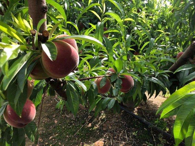 Fruta en los árboles