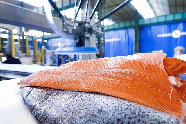Imagen de lomos de salmón