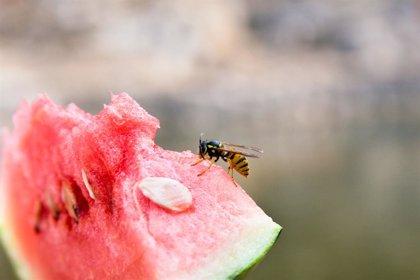 'Tips' para evitar que avispas y abejas te piquen este verano