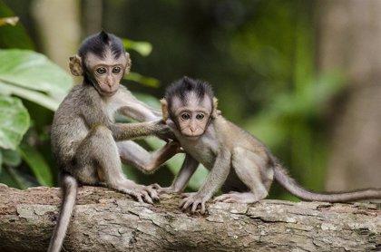 Investigadores muestran cómo los monos contribuyen a la regeneración de los bosques tropicales
