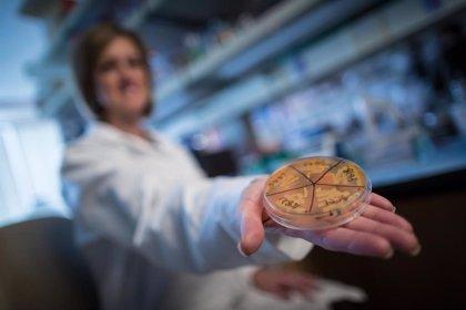 Bacterias intestinales que evitan la obesidad