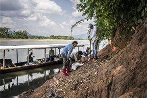 Hallan en Perú restos del mono fósil más pequeño conocido