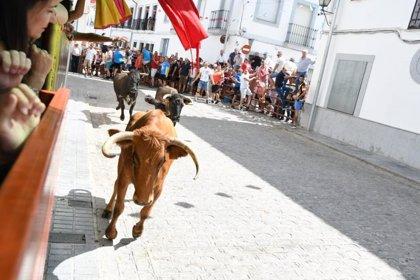 Herido un hombre tras ser corneado en los encierros de El Viso (Córdoba)