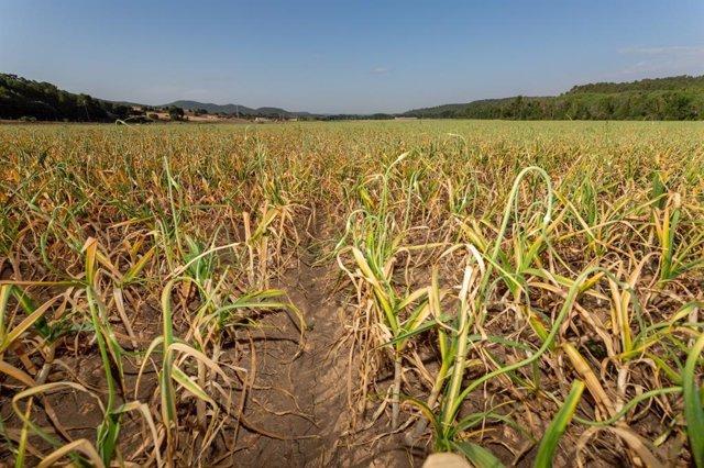 Las parcelas pequeñas y de cultivos variados evitan la pérdida de biodiversidad
