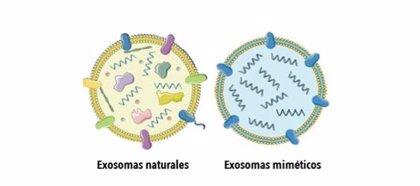 Describen el desarrollo y caracterización de nanosistemas que mimetizan exosomas para transporte selectivo de fármacos
