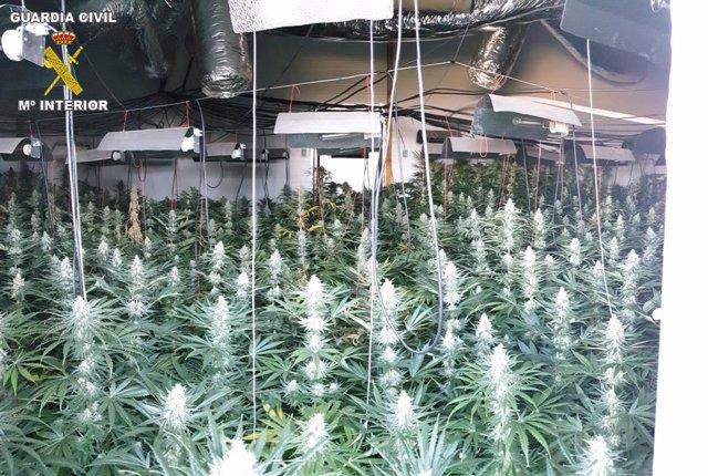 Plantación de marihuana intervenida en Granada