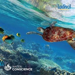 El compromiso Water Conscience de Ladival elimina de los protectores los filtros dañinos para el ecosistema marino
