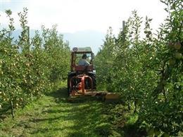 Explotació agrícola, arbres fruiters