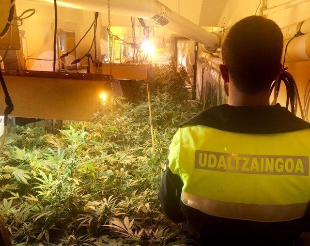 Cierre en Bilbao de asociación pro cannabis por tráfico de droga.