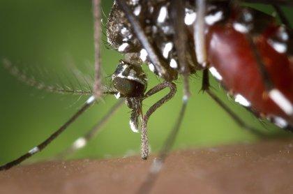 OCU: pulseras repelentes y aparatos ultrasonidos son ineficaces contra mosquitos