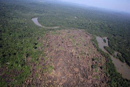 Alemania planea cesar ayudas a Brasil por su falta de compromiso contra la deforestación del Amazonas