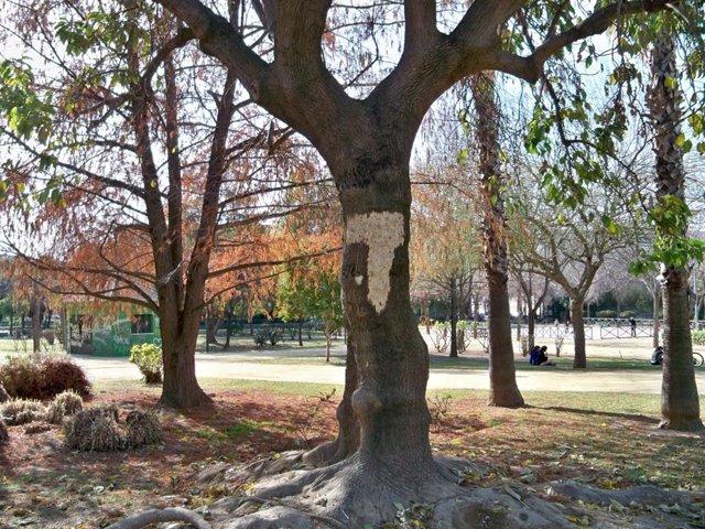 Árboles Del Parque José Celestino Mutis De Sevilla