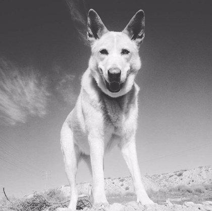 Fallece Maya, una perrita precursora de la Unidad Canina de Bomberos de Alicante que rescató personas desaparecidas