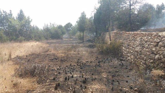 Zona afectada por el incendio de Sant Carles.