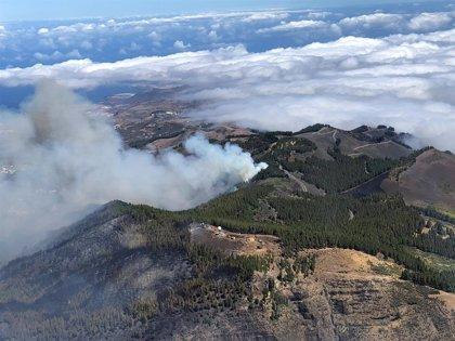 Logran contener el incendio de Gran Canaria pero se esperan fuertes vientos de hasta 70 km/h