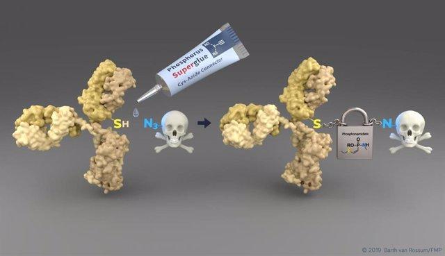 La nueva tecnología permite una manera simple de conectar los residuos de citoesteína (SH) de un anticuerpo sensible al tumor (amarillo) a las moléculas de drogas tóxicas. El conector emergente permite un transporte seguro al tumor.
