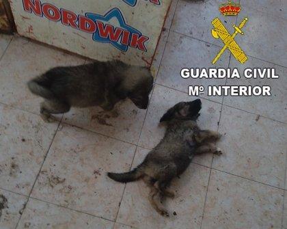 Rescatan 11 perros, entre ellos seis cachorros, desnutridos, abandonados y enfermos en Benicarló