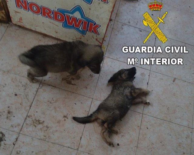 Detenido por maltrato animal en Benicarló
