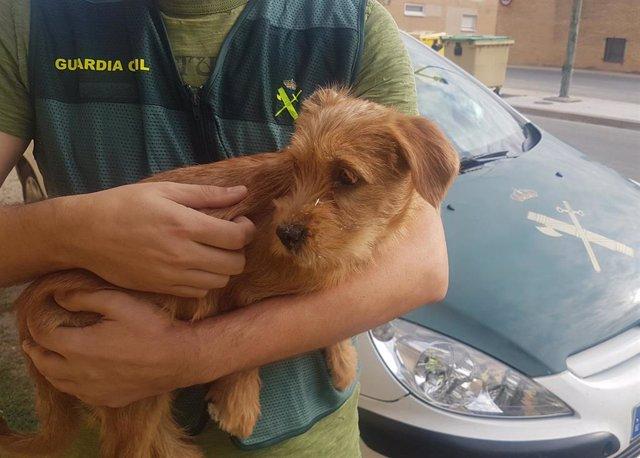 Cachorro que los dos investigados arrojaron al río en Funes