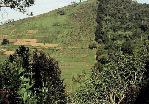 Cambio de uso de la tierra en África tropical