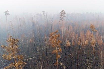 El humo de los incendios en Siberia cubre una superficie más grande que la Unión Europea
