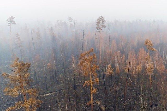 Los incendios en Siberia son una emergencia climática