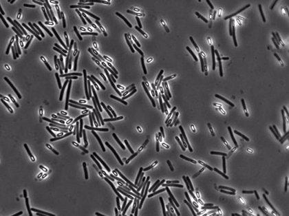La bacteria causante de la diarrea está mutando para propagarse en los hospitales
