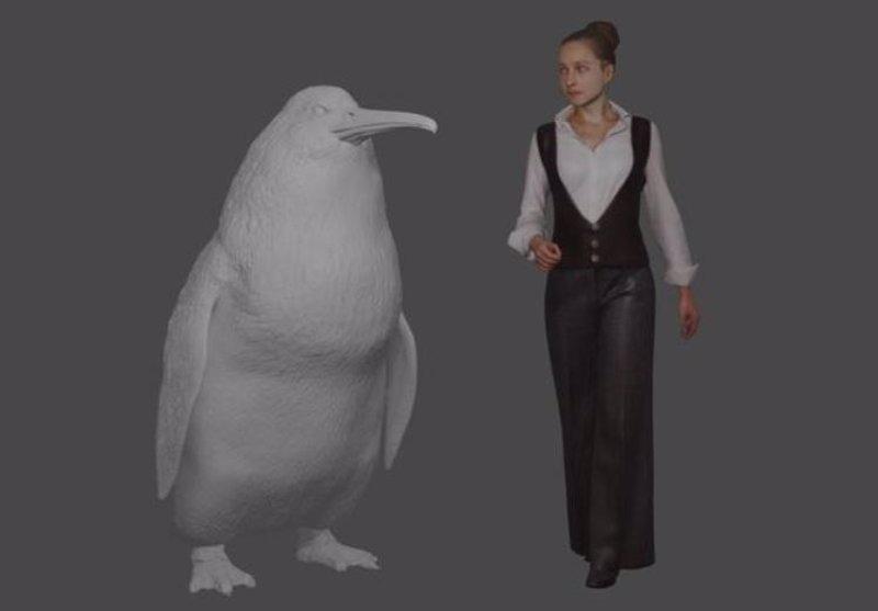Fósiles de un pingüino del tamaño humano, descubiertos en Nueva Zelanda