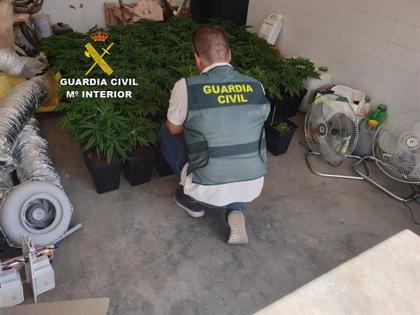 Detenido un investigado por malos tratos y presunto responsable de una plantación de marihuana en Osuna (Sevilla)