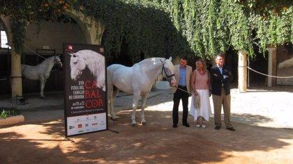 La Feria Internacional del Caballo de Córdoba se celebrará del 19 al 22 de septiembre, un mes completo de actividades