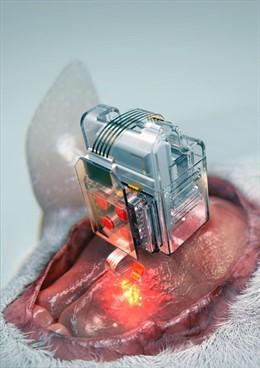 El dispositivo, utilizando cartuchos de fármacos reemplazables y 'bluetooth' de baja energía, puede examinar neuronas específicas mediante la aplkciación de luz y medicamentos durante períodos prolongados.