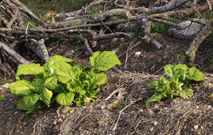 La superficie de agricultura ecológica aumentó un 8% en 2018, hasta 2,24 millones de hectáreas