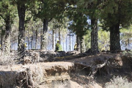 """Canarias realiza un reconocimiento de """"gratitud"""" a quienes han trabajado contra los incendios estos días"""