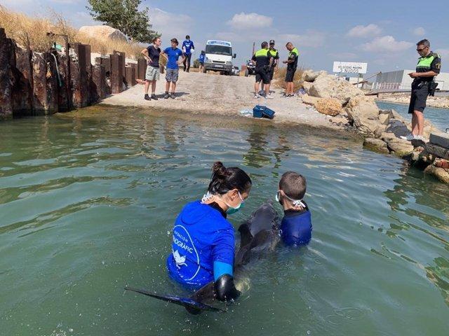 Rescate de un delfín enfermo en Pinedo en imagen de archivo