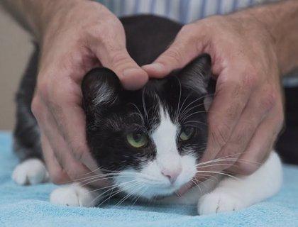Revocada la condena a un hombre en Valladolid por dejar escapar el gato de su expareja