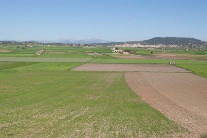 Més de 400 joves agricultors s'han incorporat al sector primari des de 2016 a Balears