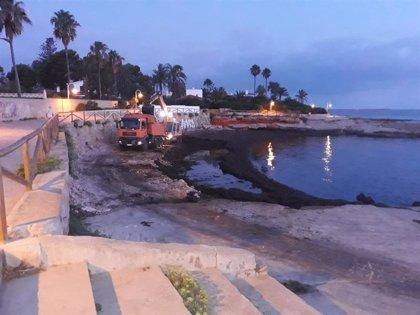 Dénia despliega un dispositivo especial para retirar de las playas el exceso de alga por el reciente temporal de mar