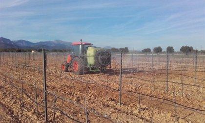 El Consell d'Eivissa aprova una convocatòria d'ajudes per al desenvolupament en l'àmbit rural i ramader