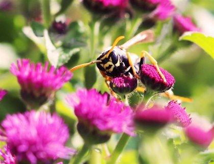 Esto es lo que debes hacer si te pica una abeja o avispa