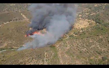 Controlado el incendio de El Madroño (Sevilla) tras afectar a unas 245 hectáreas