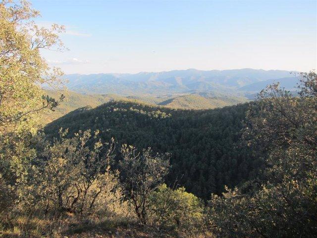 Vistas del Pirineo oscense.