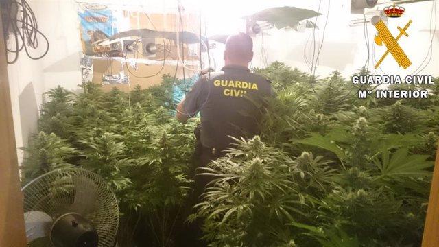 Plantación de marihuana en vivienda de Roquetas de Mar (Almería)